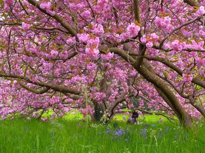 Primavera no Brasil