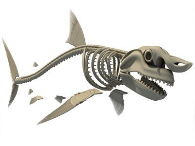 Tubarão desenho