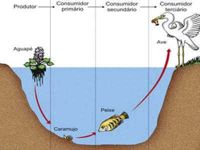 Cadeia Alimentar Produtores-consumidores e Decompositores
